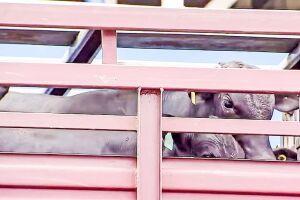 Justiça exigiu o desembarque dos animais