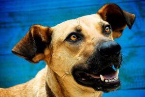 Denúncia é a de que os cães de rua estão sendo exterminados na Rússia, por causa da Copa do Mundo.