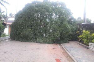 Queda de árvore em razão das fortes chuvas que atingiram Ilha Bela