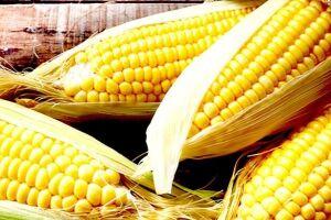 Etanol de milho já representa 60% do biocombustível vendido nos postos