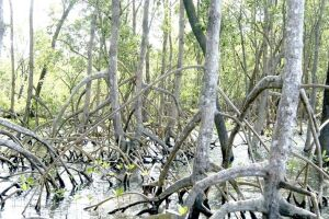 Os capítulos trazem informações sobre a biodiversidade e conservação dos manguezais, por exemplo.