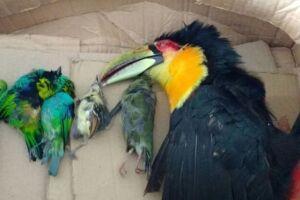 Todas as aves já estavam mortas.