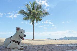 Veterinária sugere demarcar um local específico para passeios com cães