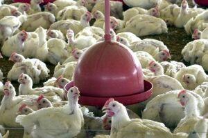 """Ainda de acordo com o centro de pesquisas especializado na agropecuária, esse cenário """"deverá resultar em oferta elevada de carne neste início de março""""."""