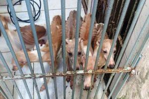 Seis animais de raça rara foram encontrados, desnutridos, num canil clandestino, em Praia Grande.