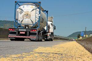 Quantidade de grãos espalhada pelo acostamento da rodovia chamou a atenção