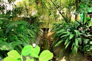 Orquidário realiza neste domingo (22), das 9h às 13h, o 2º Encontro de Ideias Verdes