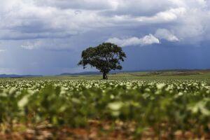 A soja responde pelo maior parte das exportações brasileiras