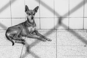 Cães e gatos deixados nas ruas da Cidade esperam por um novo lar