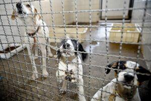 Para quem quer adotar um animal, é preciso ir até o Departamento de Controle de Zoonoses