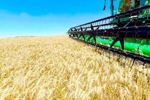 O privilégio concedido ao agronegócio reforça a impressão de que o setor controla o País
