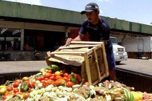 Maior parte das perdas ocorre no processo de manuseio e transporte dos alimentos