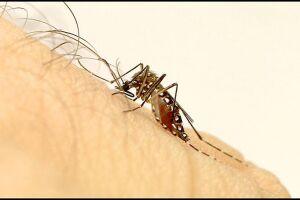 O país continua despreparado para atender novos casos de arboviroses, em especial Chikungunya