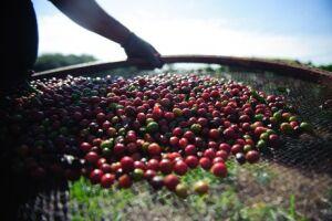 Na segunda semana do mês, exportação de produtos básicos, como café em grão, caiu 12,8% em relação à primeira semana