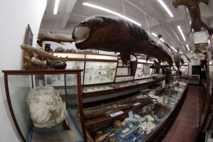 Os museus do Mar e Marítimo são os locais de parada para visitação