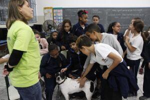 O programa foi criado pela Coordenadoria de Defesa da Vida Animal (Codevida)