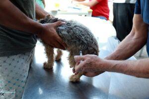 De acordo com o Instituto Pasteur, Santos possui aproximadamente 41 mil cães e gatos