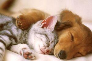 """O simples acariciar dos animais proporciona um relaxamento automático por liberar serotonina e ocitocina, os """"hormônios da felicidade"""""""