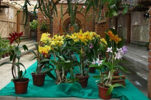 No sábado e domingo (8 e 9), haverá curso de replantio com dicas para cuidar das plantas em casas e apartamentos