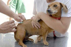 Desde o início da campanha, em 1º de agosto, foram vacinados 16.500 (12.233 cães e 4.267 gatos) em Santos.