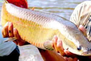 A expectativa é que essa medida impulsione a produção de peixe no Brasil, com a adição de pelo menos 31 mil toneladas/ano de pescado