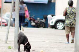 Os nimais abandonados preocupam a Câmara de Guarujá