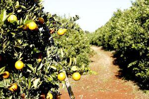 O segredo está em uma enzina isolada em subprodutos da fruta