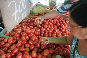O tomate, mais uma vez, teve alta e já chega a custar R$ 7 o quilo. Há algumas semanas, ele custava R$ 5