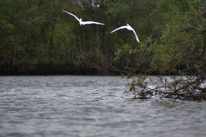 O Rio Casqueiro receberá mutirão de limpeza em maio