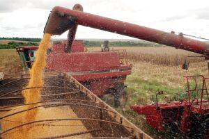 Caso se confirme a projeção da Conab, será a segunda maior produção de grãos da série histórica