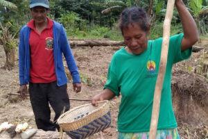 Ação foi fundamental para incentivar agricultores indígenas.