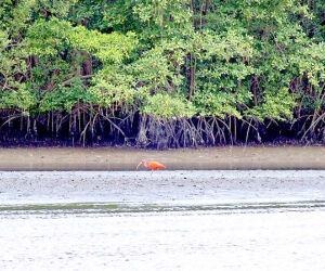 Vegetação dos manguezais serve para fixar as terras, estabilizando a costa e impedindo a erosão do solo; o mangue é considerado um berçário da vida marinha