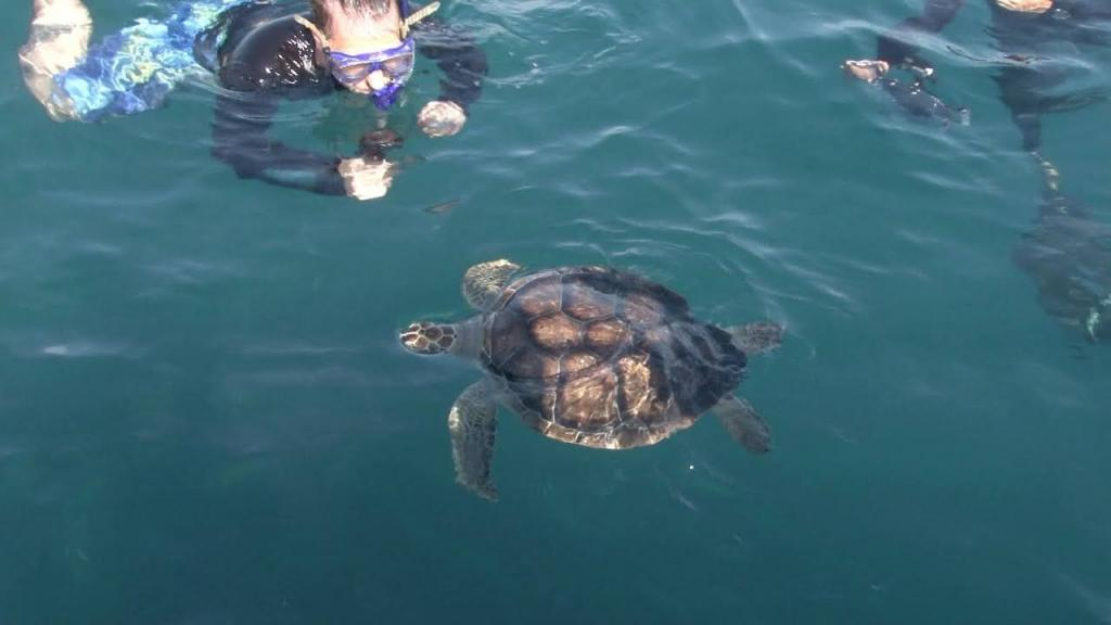 Tartarugas voltaram ao seu habitat após passar por tratamento