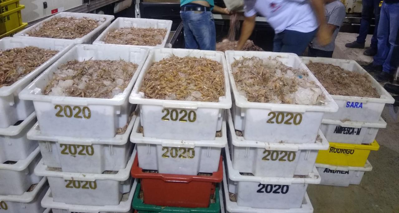 Polícia apreende mais de 5 toneladas de camarão durante ações em Guarujá