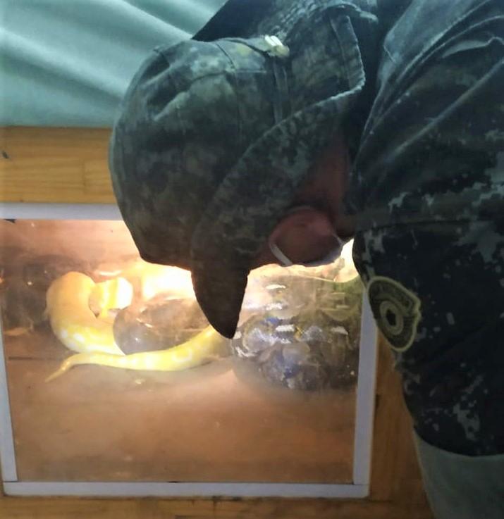 Entre os animais encontrados em cativeiro, estavam diversos tipos de cobras