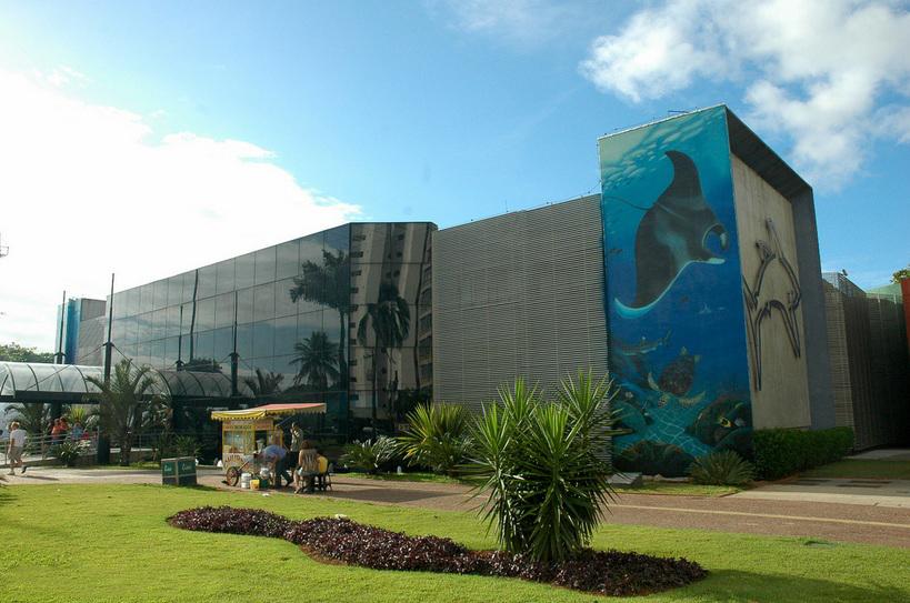 Resultado de imagem para aquario de santos