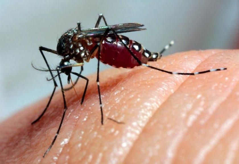 Resultado de imagem para dengue agencia brasil